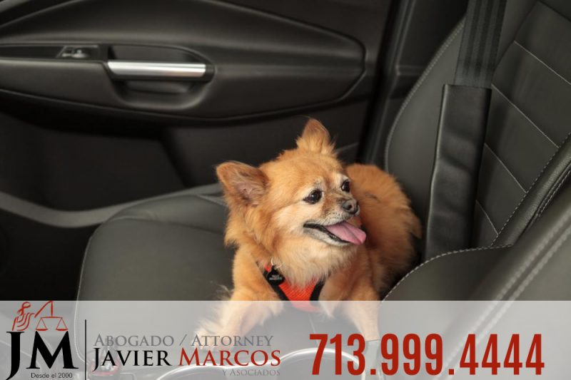 Accident with your pet | Attorney Javier Marcos