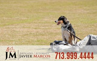 Dog leash laws | Attorney Javier Marcos 713.999.4444