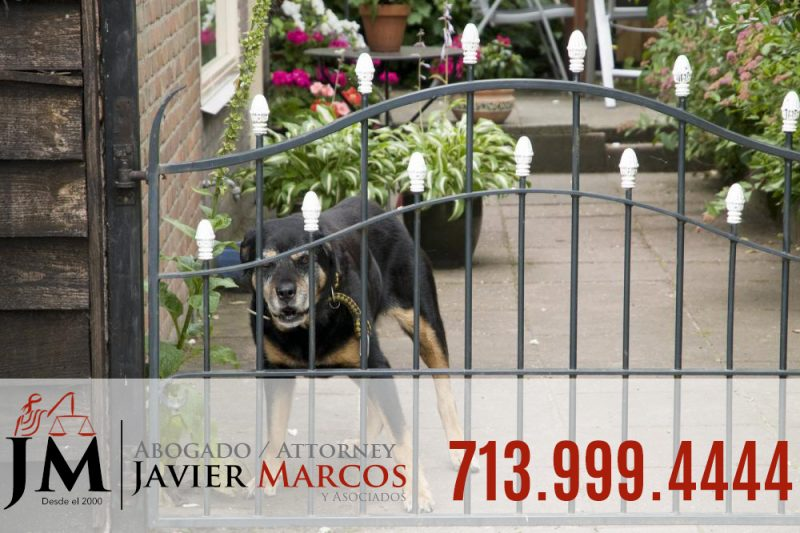 Dog bite claims | Attorney Javier Marcos 713.999.4444