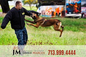 Dog bite accident | Attorney Javier Marcos | 713.999.4444
